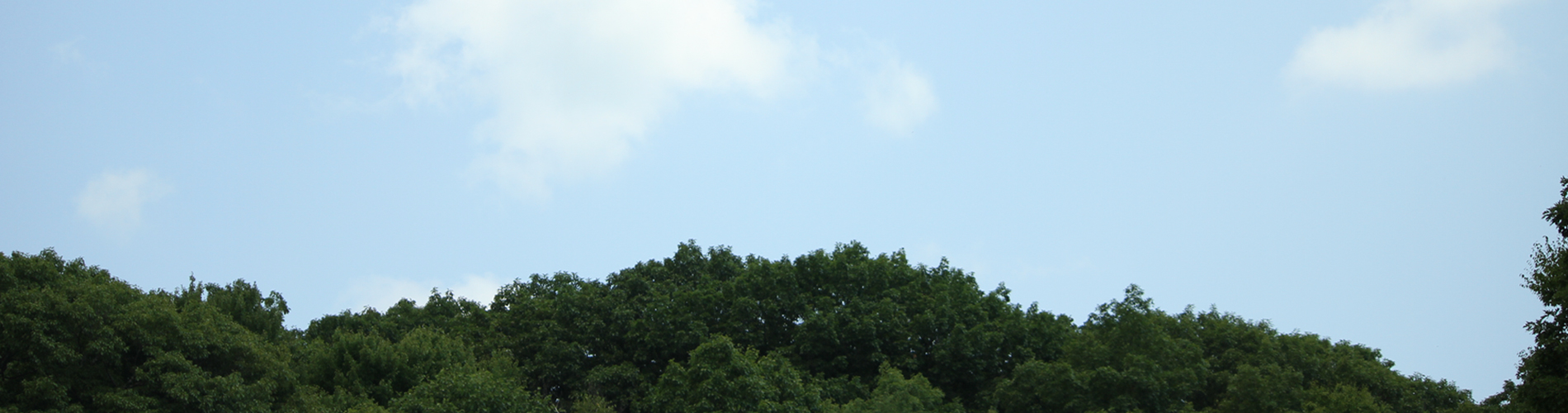 Sky and trees photo